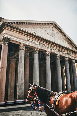 Buy stock photo Cropped shot of a horse standing outside the famous Pantheon during a sunny day in Rome