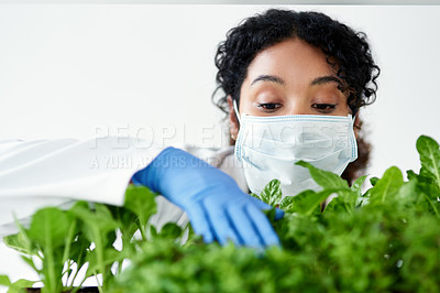 Buy stock photo Cropped shot of a female scientist experimenting with plants