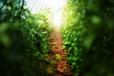 Buy stock photo Cropped shot of bushes and foliage outdoors in nature