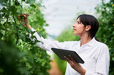 Buy stock photo Shot of an attractive young botanist using a digital tablet while working outdoors in nature