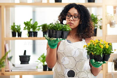 Buy stock photo Cropped shot of an attractive young female botanist comparing two sets of plants while working in her florist