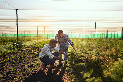 Buy stock photo Full length shot of two young farmers working inside of a greenhouse on their farm