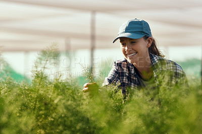 Buy stock photo Cropped shot of an attractive young female farmer working on her farm