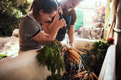Buy stock photo Shot of a happy young couple cleaning and preparing a bunch of freshly picked carrots at their farm