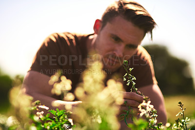 Buy stock photo Cropped shot of a young farmer looking at the crops on his farm