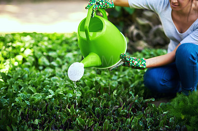 Buy stock photo Cropped shot of an unrecognizable female farmer watering plants and crops at her farm