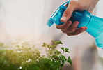 Water will keep the plant growing healthily