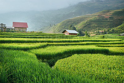 Buy stock photo Shot of a lush green field in a Vietnamese village