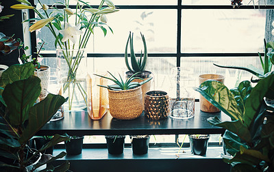 Buy stock photo Cropped shot of aloe vera plants on a desk in an empty floristry during the day