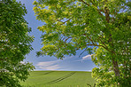 Rolling Green fields and blue sky framed by trees