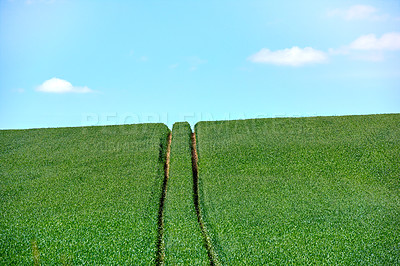 Buy stock photo Rolling Green fields and blue sky
