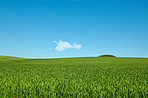 Green fields and blue sky in spring