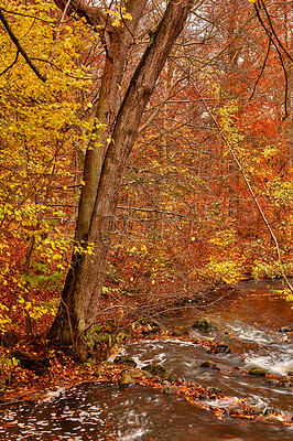 Buy stock photo The beautiful colors of autumn. Autumn forest.