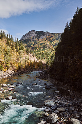 Buy stock photo Shot of a small river running through a forest outdoors in the East Kootenay region of British Columbia, Canada