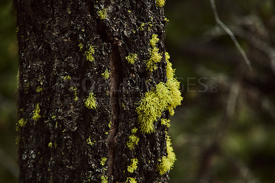 Buy stock photo Closeup shot of plants growing out of the bark of a tree outdoors in nature