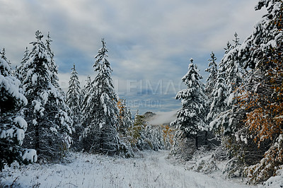 Buy stock photo Shot of a beautiful snow capped forest during winter in the East Kootenay region of British Columbia, Canada