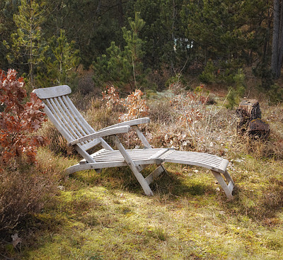 Buy stock photo Uncultivated forest wilderness in Denmark - Odde Natural Park
