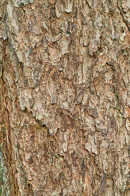 Buy stock photo Background and copy space - bark and  rind
