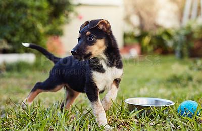 Buy stock photo Shot of an adorable little puppy playing outside