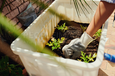 Buy stock photo Cropped shot of an unrecognisable woman gardening in her backyard at home