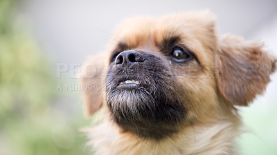 Buy stock photo Cropped shot of an adorable little puppy spending time outdoors