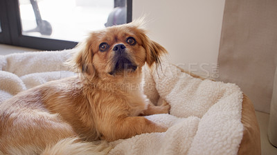 Buy stock photo Shot of an adorable dog relaxing on a pet bed at home