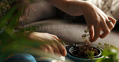 Buy stock photo Cropped shot of an unrecognizable woman trimming a pot plant at home