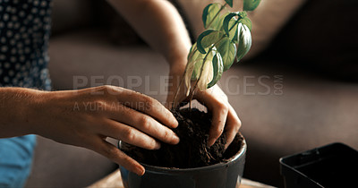Buy stock photo Cropped shot of an unrecognizable woman repotting a plant at home