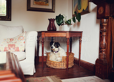 Buy stock photo Shot of an adorable dog sitting in a basket at home