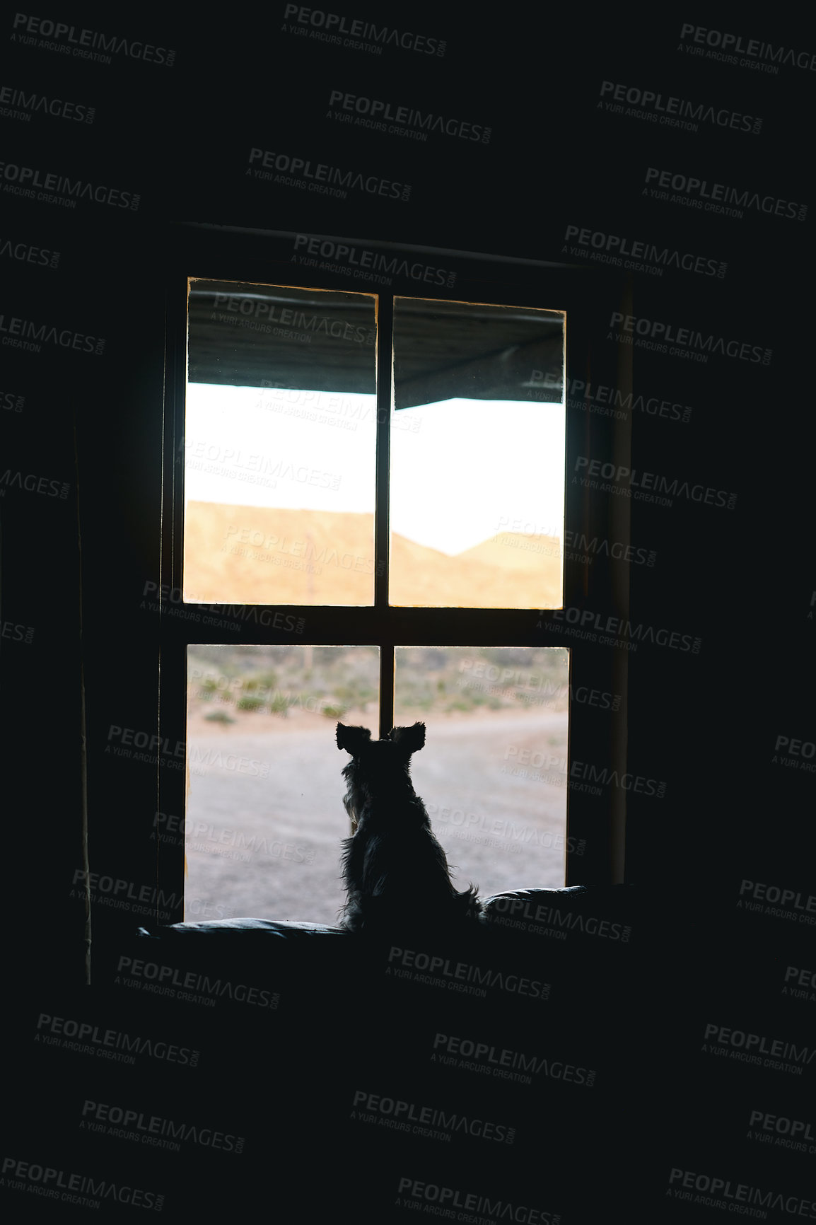 Buy stock photo Rearview shot of an adorable dog looking out of a window at home