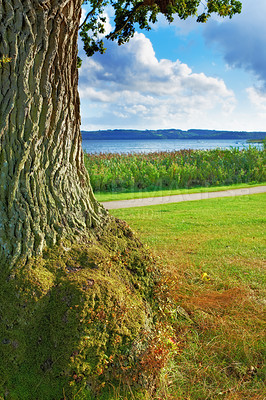 Buy stock photo A photo green moss on a tree