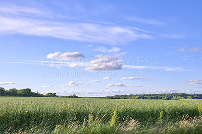 Buy stock photo A  photo of the Danish countryside at summertime