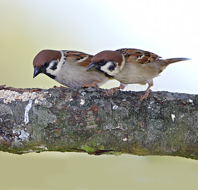 Buy stock photo A telephoto of a beautiful sparrow in my garden