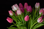 Tulips with black background