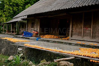 Buy stock photo Shot of a woman preparing corn for sale in a Vietnamese village