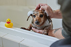 As pampered as a pooch gets