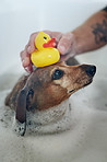 The bathing adventures of Doggo and Ducko