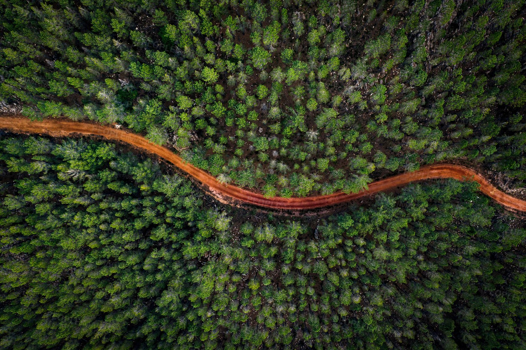 Buy stock photo High angle shot a dirt road winding through a forest