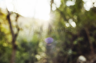 Buy stock photo Blurred shot of and empty hiking trail in nature