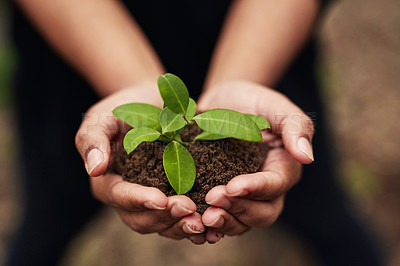 Buy stock photo Cropped shot of an unrecognisable woman holding a plant growing out of soil in nature