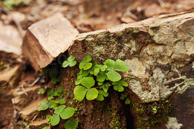 Buy stock photo Shot of green leaves growing along a rocky hiking trail