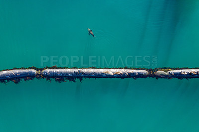 Buy stock photo High angle shot of a group of seals sitting on a pipeline at sea