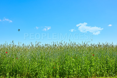 Buy stock photo Farmland in springtime - lots of copy space