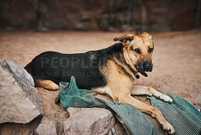 Buy stock photo Shot of an adorable dog sitting on a rock out in nature