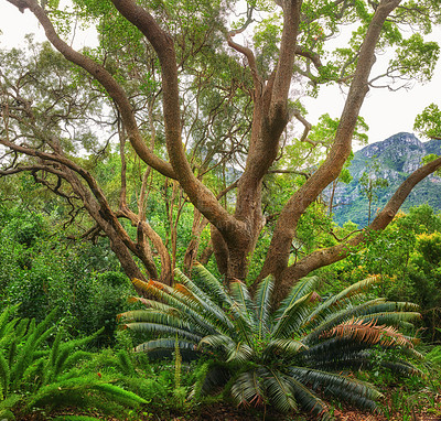 Buy stock photo Flowers, plants and trees in Kirstenbosch Botanical Gardens in Cape Town, South Africa,