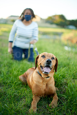 Buy stock photo Shot of a dog out for a walk with his owner