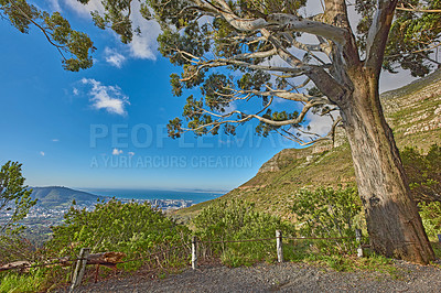 Buy stock photo Images of the nature of Table Mountain - Cape Town, Western Cape