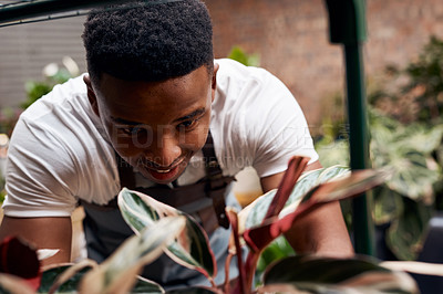 Buy stock photo Shot of a young man working with plants in a garden centre