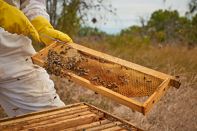 Buy stock photo Shot of an unrecognisable beekeeper opening a hive frame on a farm
