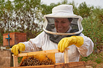The busiest bee gets the sweetest honey